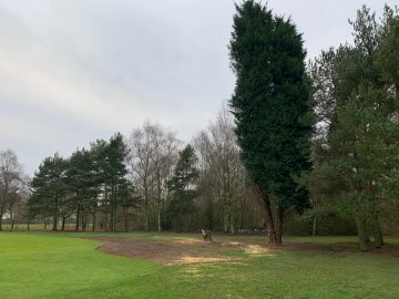 Tree management programme in effect, example of conifers removed on the 7th