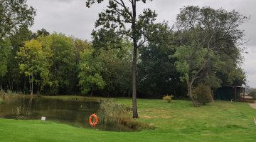 Rotting trees removed around the pond on the 1st Hole